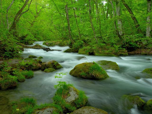 奥入瀬渓流 に対する画像結果