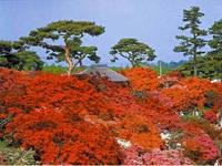 県立つつじが岡公園・写真
