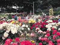 敷島公園ばら園・写真