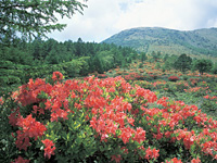湯の丸高原(群馬県)