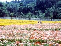 観梅公園・写真
