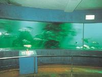 稚内市ノシャップ寒流水族館・写真