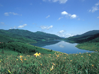 野反湖の高山植物・写真