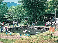 わらび平森林公園キャンプ場・写真