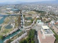 赤城神社参道松並木とツツジ群・写真