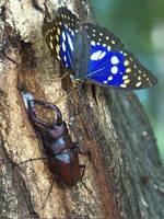 群馬県立ぐんま昆虫の森・写真