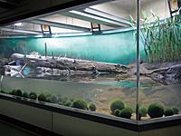 マリモ展示観察センター・写真