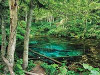 神の子池・写真