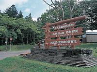 利尻島自然休養林・写真