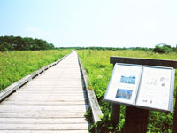 温根内木道コース・写真