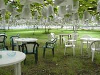 小谷野果樹園・写真
