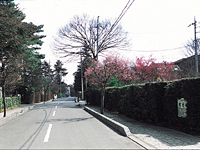 大宮盆栽村・写真