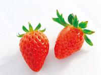 苺の里 毛呂山バリアフリー観光いちご園 西戸店・写真