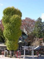 川越八幡宮・写真