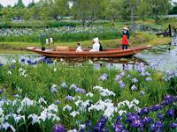 水郷佐原水生植物園