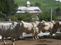 千葉県酪農のさと・写真