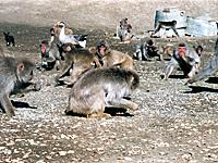 高宕山自然動物園・写真