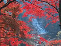 粟又の滝・写真
