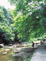 粟又の滝遊歩道・写真