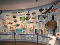 千葉県立中央博物館分館 海の博物館・写真