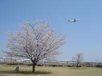 三里塚さくらの丘・写真