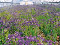 花摘み園 チースの里・写真