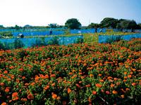 花の里 フローラルビレッジ名倉・写真