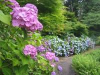 花野辺の里・写真