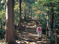 高尾山自然研究路・写真