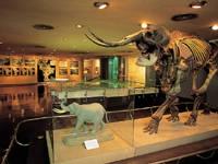 横須賀市自然・人文博物館・写真