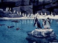 上越市立水族博物館・写真
