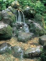 杜々の森名水公園・写真