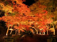松雲山荘の紅葉・写真