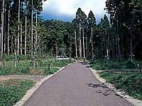 グリーンビレッジ弥彦オートキャンプ場・写真