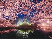 高田城百万人観桜会・写真