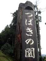 椿公園・写真