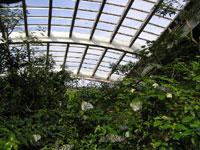 石川県ふれあい昆虫館・写真