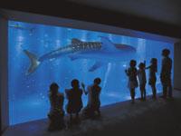のとじま水族館・写真