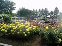 金沢南総合運動公園バラ園