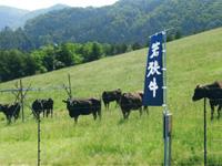 若狭牛の里 福井県嶺南牧場・写真
