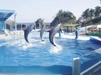 越前松島水族館・写真