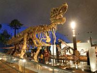 恐竜化石発掘現場・写真