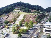 西山公園の桜・写真