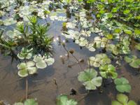 中池見人と自然のふれあいの里・写真