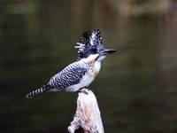 南アルプス邑 野鳥公園