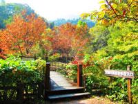 大柳川渓谷遊歩道・写真