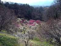 梅の里・写真