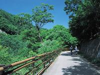 西沢渓谷ハイキング・写真