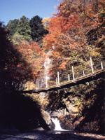 大柳川渓谷の紅葉・写真