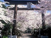 富士御室浅間神社・写真